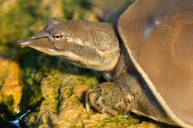 if you want to give a turtle an use a the verge