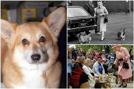 could the queen u0027s love affair with the pembrokeshire corgi be