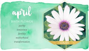 april birth flower daisy ftd com