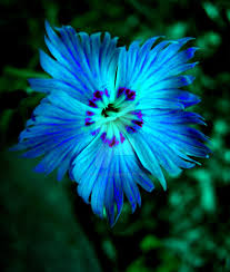 blue flower neon blue flower by kawaiikitteh on deviantart