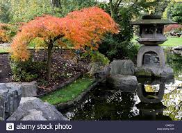 the ornamental pool and accompanying acer tree in autumn stock
