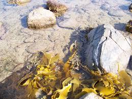 Beach Of Glass Matthew Flinders I Make The Glass