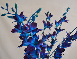 blue orchids for sale orchids just it bouquets artificial wedding flowers
