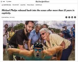 Chive Memes - 5 michael phelps memes to make you miss the olympic athlete