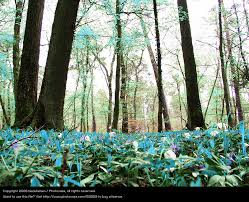 nature forest turquoise a royalty free stock photo from photocase