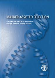 marker assisted selection current status and future perspectives