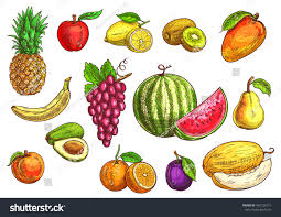 Exotic Colors by Fruits Set Sketch Hand Drawn Vector Stock Vector 462720715