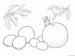 coloring page a branch with cherries