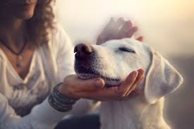 state with most dog owners 2016 dedicated to pets in ocean springs biloxi gulfport and gautier