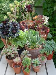 How To Make A Succulent Planter by Succulent Container Gardening Hgtv