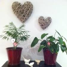 Winter Indoor Garden - winter indoor garden cool home ideas pinterest indoor