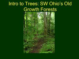 Ohio vegetaion images Intro to trees sw ohio 39 s old growth forests outline our geologic jpg