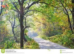 the deepandserene pretty trees autumnal scenery stock
