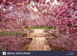 washington dc usa spring garden near the national mall during the