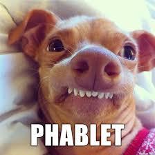 Tuna The Dog Meme - phteven always makes phelfies on his phablet album on imgur