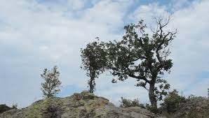wide angle cloudy time lapse in rocky mountain tree in foreground