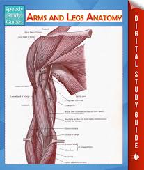 Human Anatomy And Physiology Marieb 9th Edition Quizzes Cheap Study Human Anatomy Find Study Human Anatomy Deals On Line