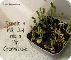 mini greenhouses from milk jugs preparednessmama