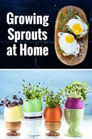 Growing Your Own Vegetable Garden by 137 Best My Vegetable Garden Images On Pinterest Allen Smith