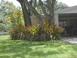 Landscaping Ideas Around Trees Landscape Ideas For Under Trees This Gardens Ideas Shades Plants