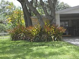 garden ideas under trees home design ideas