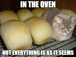 Cat In Bread Meme - cat meme bread google search puss in bread pinterest