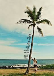 palm tree quotes the best quotes reviews