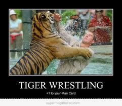Funny Tiger Memes - tiger wrestling 1 t your man card tiger meme picsmine