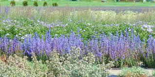 native houston plants native utah plants google search ut planting pinterest