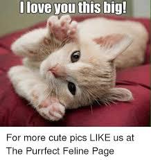 Cute I Love You Meme - 25 best memes about i love you this big i love you this big