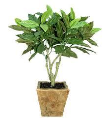Tropical House Plants Names - garden design garden design with names of indoor house plants