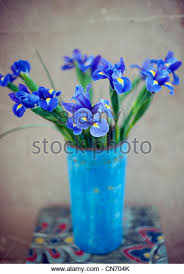 iris flowers in vase stock photos u0026 iris flowers in vase stock