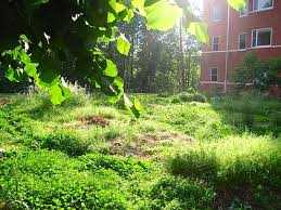 potomac heights organic vegetable garden building community