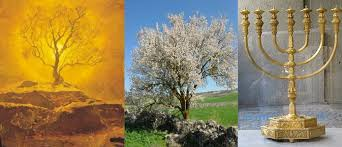 menorah tree of tree of part 5 the tree and the temple chad s random musings