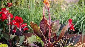 Tropical Plants For Garden - ideas for a tropical garden sunset