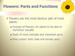 Part Of Flowers - flower anatomy lesson plan nres b ppt video online download