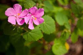 native houston plants neighborhood butterfly garden helps change blight to beauty
