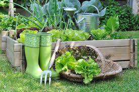 how to start a kitchen garden for beginners 31 daily