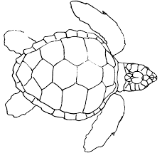 drawn turtle outline pencil and in color drawn turtle outline