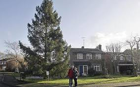 s 6ft tree grows to 50ft telegraph