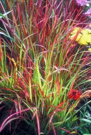 814 best gf ornamental grasses images on ornamental