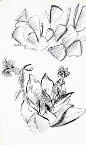 waterwise botanicals succulent celebration u2014 falling waters landscape