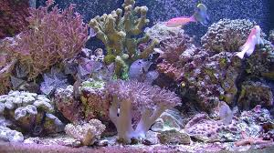 aquarium for your home saltwater reef trailer youtube