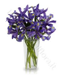 flowers international iris archives delivery flowers international