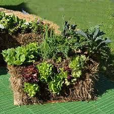 straw hay bale gardening easy u0027no dig u0027 garden nurseries online