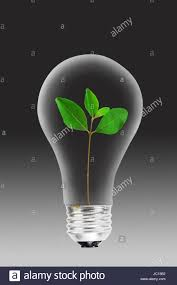 small green tree inside glass lightbulb stock photo royalty free