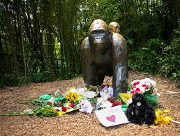 harambe u0027s behavior may have been normal gorilla play