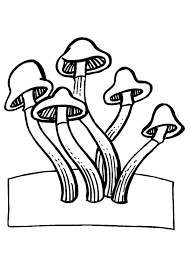 104 colouring mushrooms images mushrooms