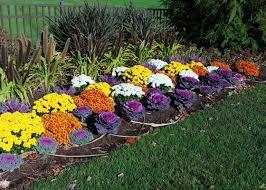 best 25 flowering kale ideas on autumn planter ideas