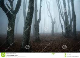 scary haunted halloween forest with twisted trees stock photo